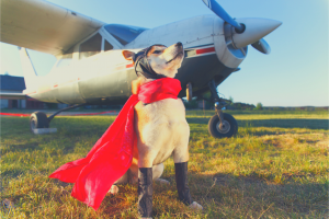 dog dressed as pilot near plane