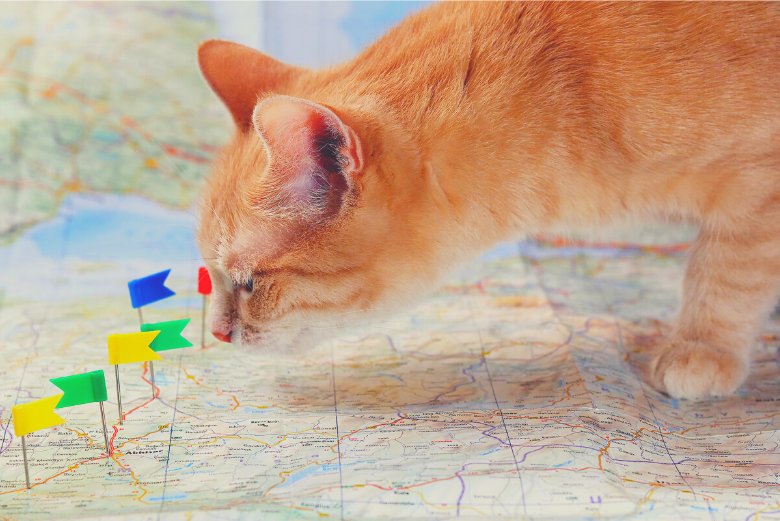 Cat standing on map with flags