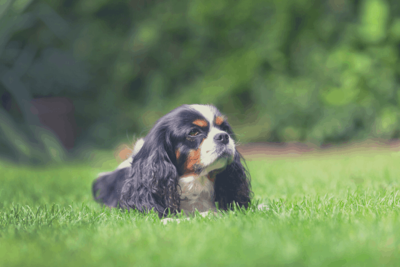 small dog laying on grass